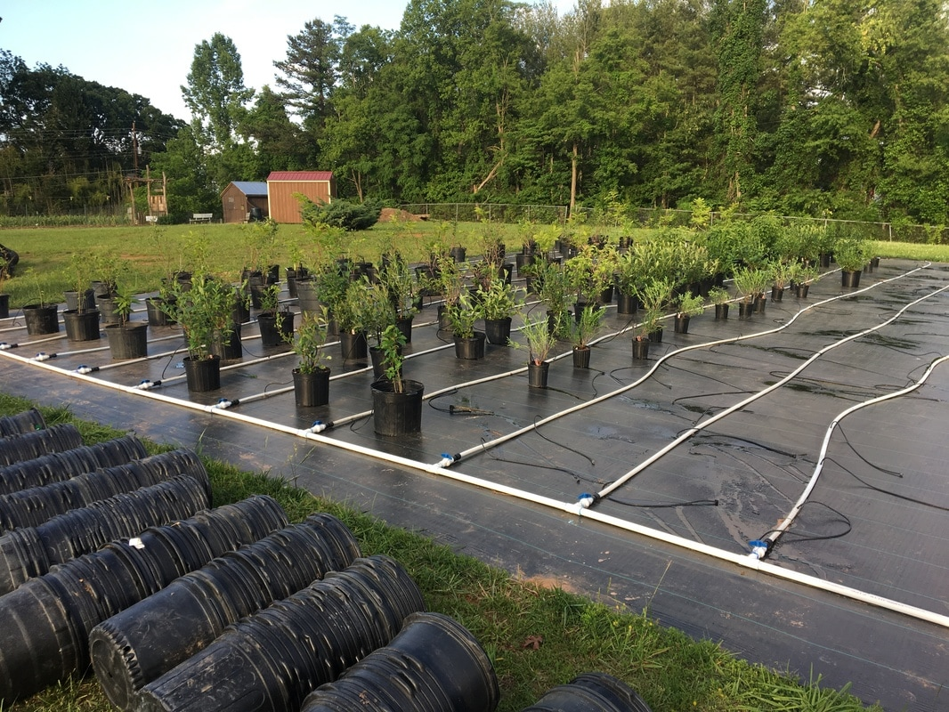 Tree Nursery Near Me Thenurseries